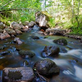 Les ruisseaux de la forêt boréale émettent plus gaz à effet de serre que prévu. (Crédit: Marcus B. Wallin)