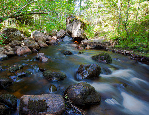 A new study suggest that streams in the boreal forest emit more carbon dioxide than previously thought. (Photo credit : Marcus B. Wallin)