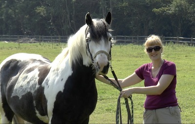 Researcher Jennifer Wathan poses with one of the horses used in the experiment. A new study shows that horses rely on both the eyes and ears of fellow horses to understand where their attention is directed. (Photo credit: Karen McComb)