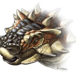 Dessin d'artiste d'une nouvelle espèce d'ankylosaure, Zaraapelta nomadis, découverte en Mongolie. (Image: Danielle Dufault)