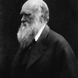 The Darwin Awards, named after Charles Darwin, recognize individuals who have positively contributed to human evolution by accidentally removing themselves from the process of natural selection through their own actions. (Photo credit:  Julia Margaret Cameron, via Wikimedia Commons).