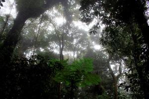Des arbres, des fougères et des lianes dans une forêt tropicale du Costa Rica. (Photo : Peter Groenendijk)