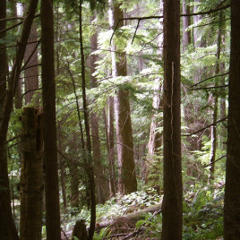 Old-growth forests showed no difference in recruitment rates for new trees due to the lack of unoccupied canopy and ground space. (Image credit: Glenn Scofield Williams, flickr.com)