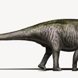 Brontosaurus artistic reconstruction (Credits: Davide Bonadonna, Creative commons license CC- BY NC SA)