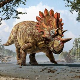This is an artistic life reconstruction of the new horned dinosaur Regaliceratops peterhewsi in the palaeoenvironment of the Late Cretaceous of Alberta, Canada. (Credit: Art by Julius T. Csotonyi. Courtesy of Royal Tyrrell Museum, Drumheller, Alberta.)