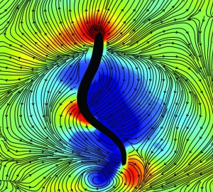 Snapshot of a lamprey eel (black outline) swimming in a water tank. The red regions represent high-pressure pushing forces and the blue regions represent  low-pressure suction forces.