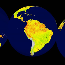 Global snapshot of the Vegetation Sensitivity Index (VSI), a new indicator of vegetation sensitivity to climate variability. Areas in green (red) have comparatively lower (higher) vegetation sensitivity. Grey areas are barren land or ice covered. (Image credit: Seddon et al)