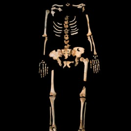 A skeleton of an early Neandertal ancestor from Sima de los Huesos, a unique cave site in Northern Spain. (Image credit: Javier Trueba, MADRID SCIENTIFIC FILMS)