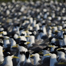 5-Jarrod-Hodgson-terns-ground-view-1024x680