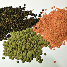 "Lentils, shown above in three different colour varieties, are one type of Pulse. Pulses are part of the legume family, however ""pulse"" only refers to the dried seed. (Image credit: Justin C)"