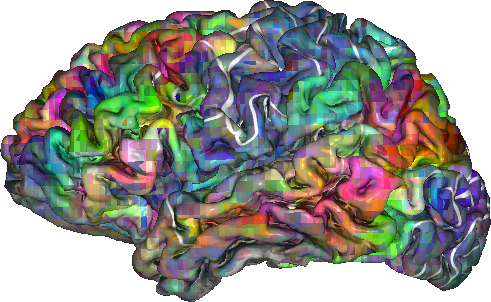 The color of each voxel indicates its semantic selectivity, or which category of words it is selective for. For example, green voxels are mostly selective for visual and tactile concepts, while red voxels are mostly selective social concepts. White lines show the outlines of known functional brain regions. (Visualizations created by Alexander Huth using pycortex software by James Gao, Mark Lescroart, and Alexander Huth)