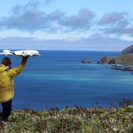 Ecologist Jarrod Hodgson launches a fixed-wing UAV on Australia's sub-Antarctic Macquarie Island. (Photo courtesy of Jarrod Hodgson via EurekAlert!)