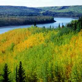 Satellite sensor data can be used to track slight colour changes in boreal forests (Image by Gord McKenna via Flickr CC BY ND NC 2.0)