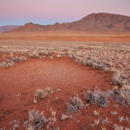 "The enigmatic ""fairy circles"" of the Namib Desert exhibit strikingly regular spatial patterns, which have mystified many observers. (Image by Jen Guyton)"