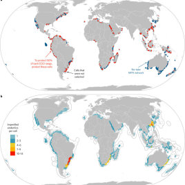 Species conservation targets; locations for MPA creation or expansion to protect 50% of the geographic range of all 99 imperilled endemic chondrichthyans (using Marxan): planning units selected (red); planning units not selected (white); and planning units currently designated as a no-take MPA (blue). b, Hotspots; global locations of the highest numbers of imperilled endemic chondrichthyans within a country's national waters (EEZ). Warm colours represent areas with high numbers of overlapping imperilled and endemic chondrichthyans, cool colours show where there are fewer numbers of species per cell. Hottest hotspot countries are those with 4–14 imperilled endemics per grid cell.  (Davidson, L. N. K. & Dulvy, N. K.)