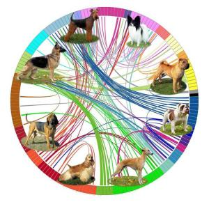 This diagram represents the genetic analysis of dog breeds. (NIH Dog Genome Project)