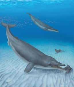 Two Mystacodon selenensis individuals diving down to catch eagle rays. (Image by Alberto Gennari)