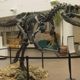 This is an Allosaurus fragilis skeleton mounted in the lobby of the San Diego Natural History Museum. (Image via Wikipedia Creative Commons)