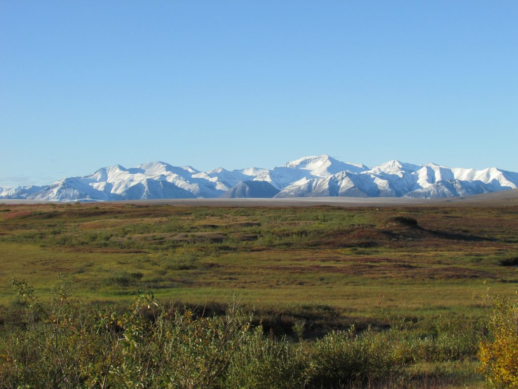 the arctic tundra ecosystem at Toolik Field Station with the Brooks Range in the background. (Image by Daniel Obrist)