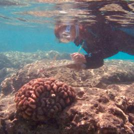 Dr. Ku'ulei Rodgers conducting coral bleaching survey. (Image by Keisha Bahr)