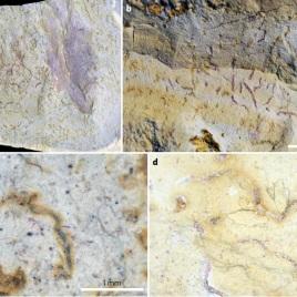 Meiofaunal trace fossils were found (et al.)