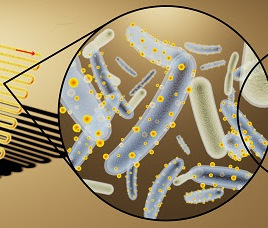 Artist's rendering of bioreactor (left) loaded with bacteria decorated with cadmium sulfide, light-absorbing nanocrystals (middle) to convert light, water and carbon dioxide into useful chemicals (right). (Kelsey K. Sakimoto)