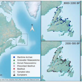This schematic shows the settlement history of Newfoundland encompassing occupations by at least three distinct cultural groups: MA, Dorset Palaeoeskimo, and Beothuk. (Produced by Deirdre Elliott with QGIS 2.18.44, and data from Stephen Hull and Natural Earth.)